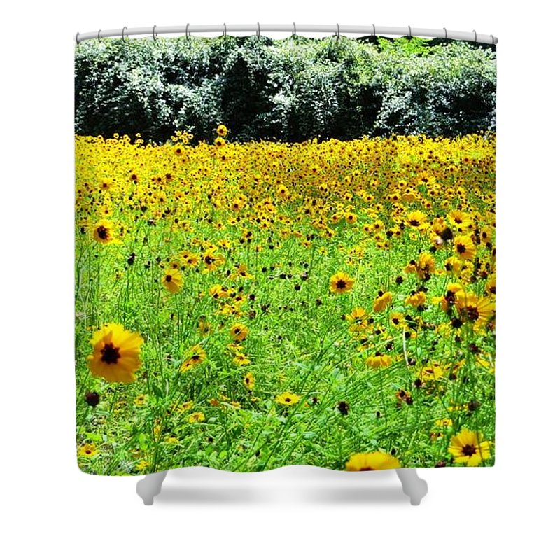 Wild Sunflowers Shower Curtain featuring the pyrography Wild Sunflowers by Tim Townsend