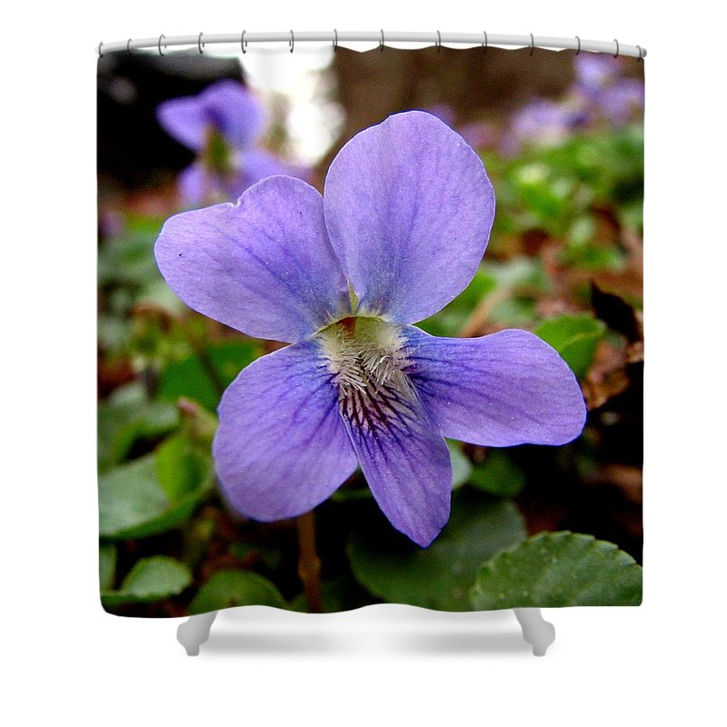Violet Shower Curtain featuring the photograph Wild Violet 1 by J M Farris Photography