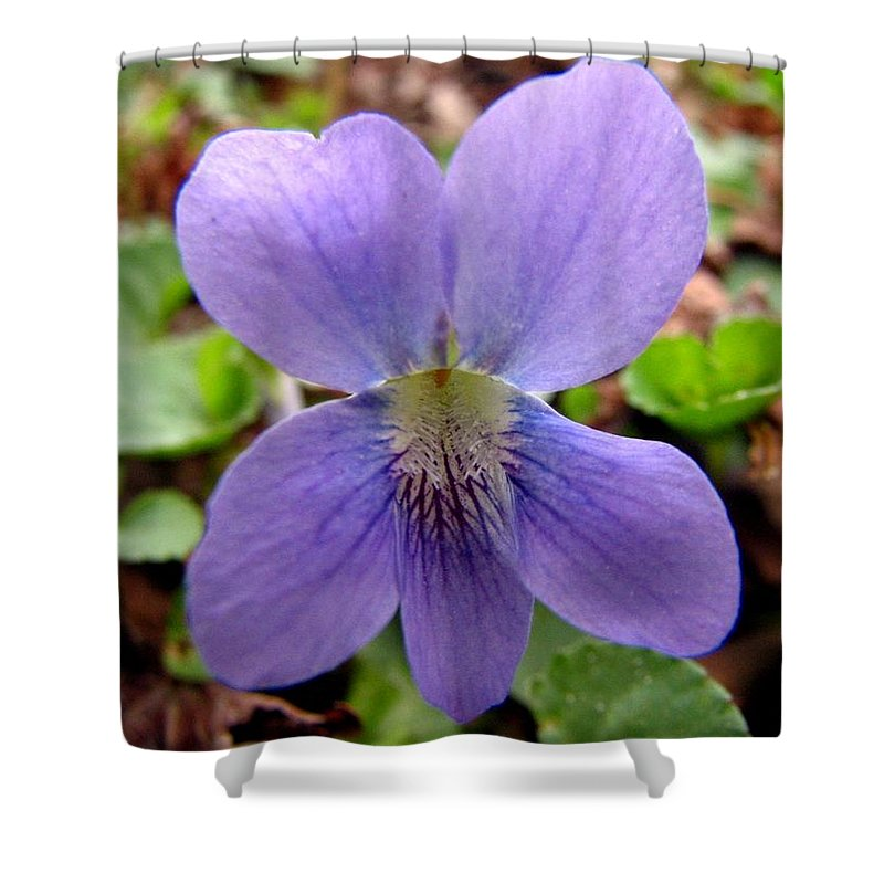 Violet Shower Curtain featuring the photograph Wild Violet 2 by J M Farris Photography