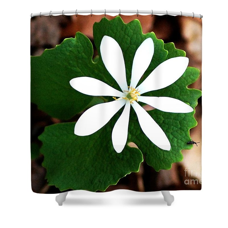 Digital Photo Shower Curtain featuring the photograph Wild White by David Lane