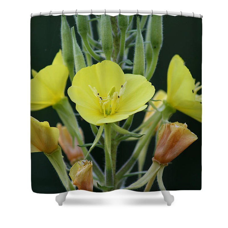 Flower Wild Yellow Green Orange Plants Garden Digital Shower Curtain featuring the photograph Wild Yellow by Andrea Lawrence
