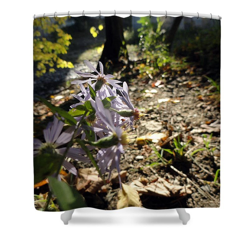 Nature Shower Curtain featuring the photograph Wildflower Looker by Trish Hale
