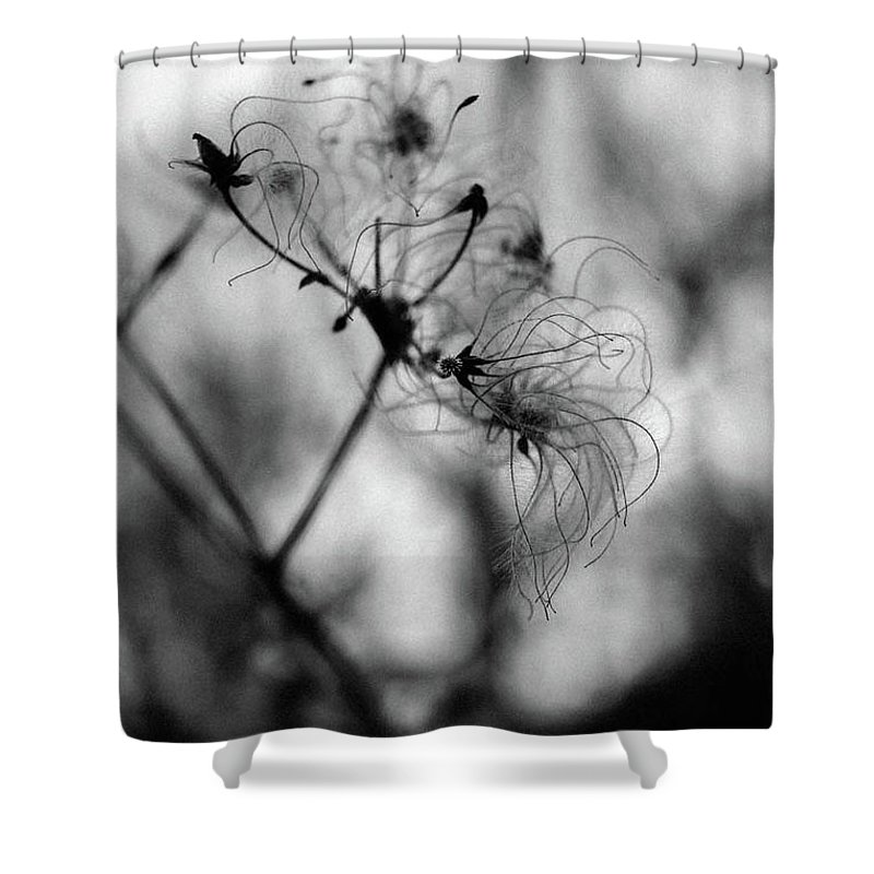 Abstract Shower Curtain featuring the photograph Wildflower by Lyra Bartell