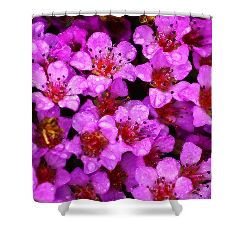 Wild Flowers Shower Curtain featuring the photograph Wildflowers by Anthony Jones