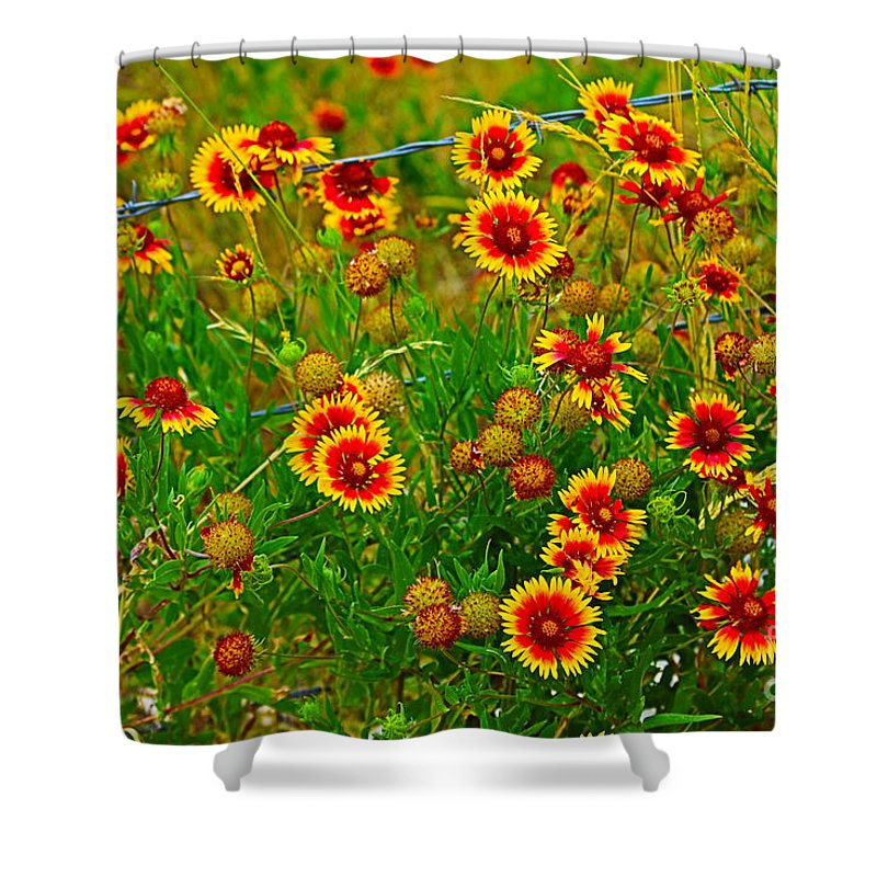 Wildflower Shower Curtain featuring the photograph Wildflowers On The Barb by Jeanie Mann