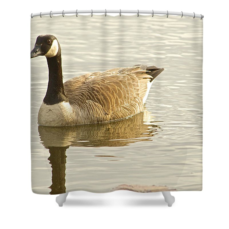 Geese Wildlife Birds Shower Curtain featuring the photograph Wildlife by Frank Conrad