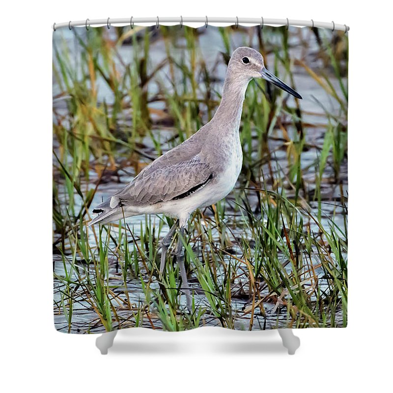 Color Shower Curtain featuring the photograph Willet On Beach by Rick Higgins