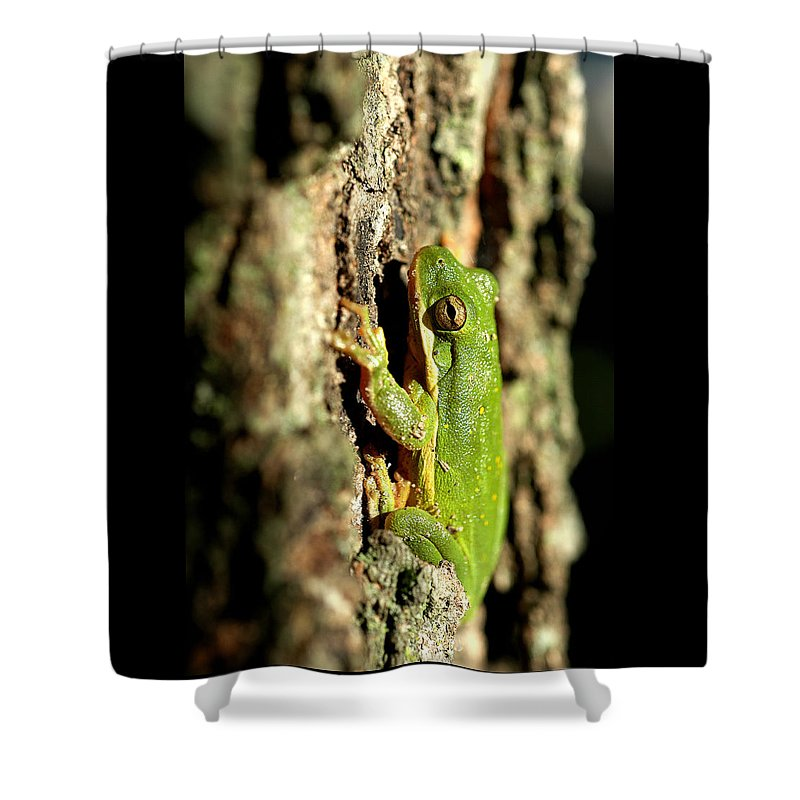 Toad Shower Curtain featuring the photograph Willing Subject by D'Arcy Evans