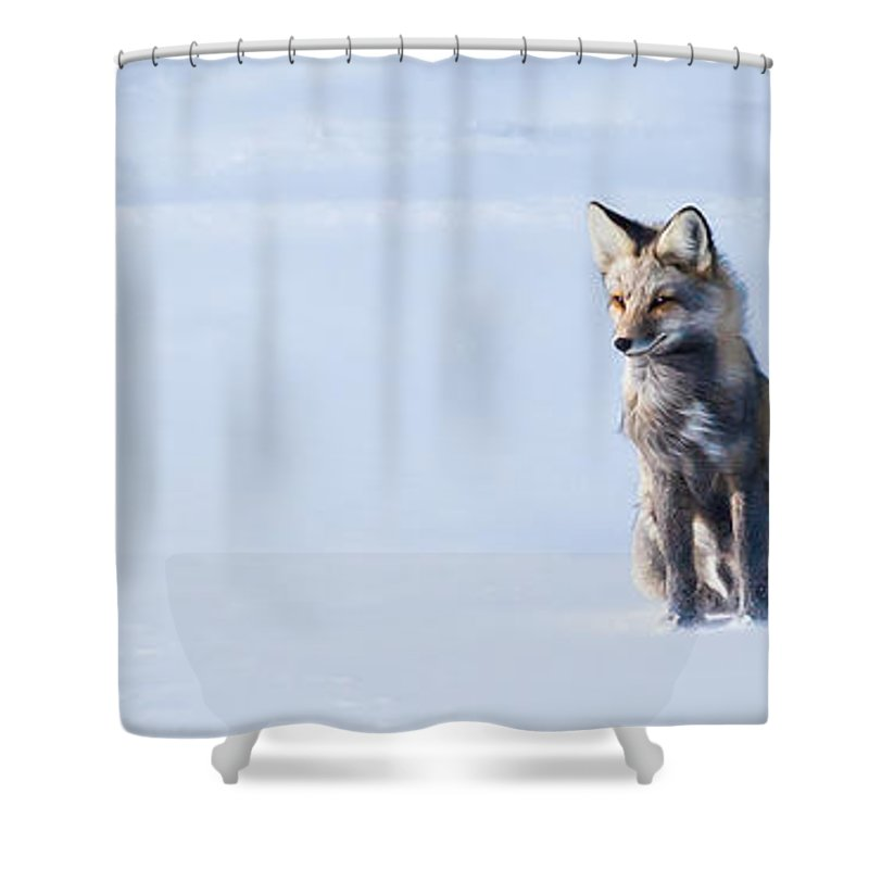 Shower Curtain featuring the photograph Wind Brushed Beauty by J and j Imagery