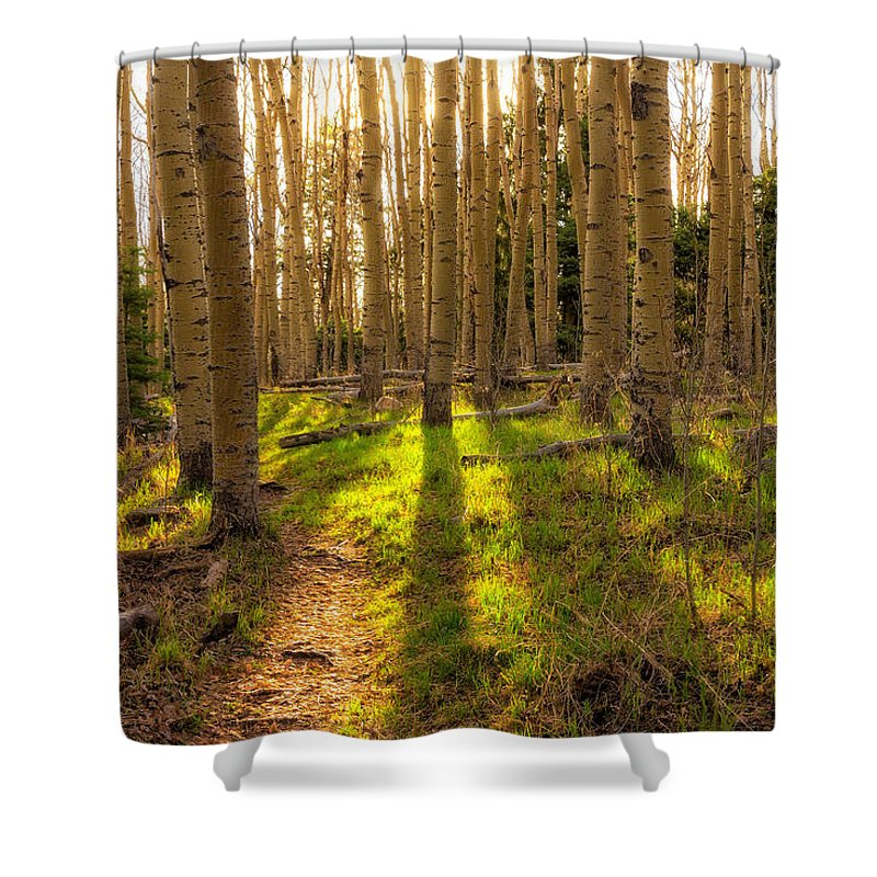 Aspen Shower Curtain featuring the photograph Windsor Trail At Dusk - Santa Fe National Forest New Mexico by Brian Harig