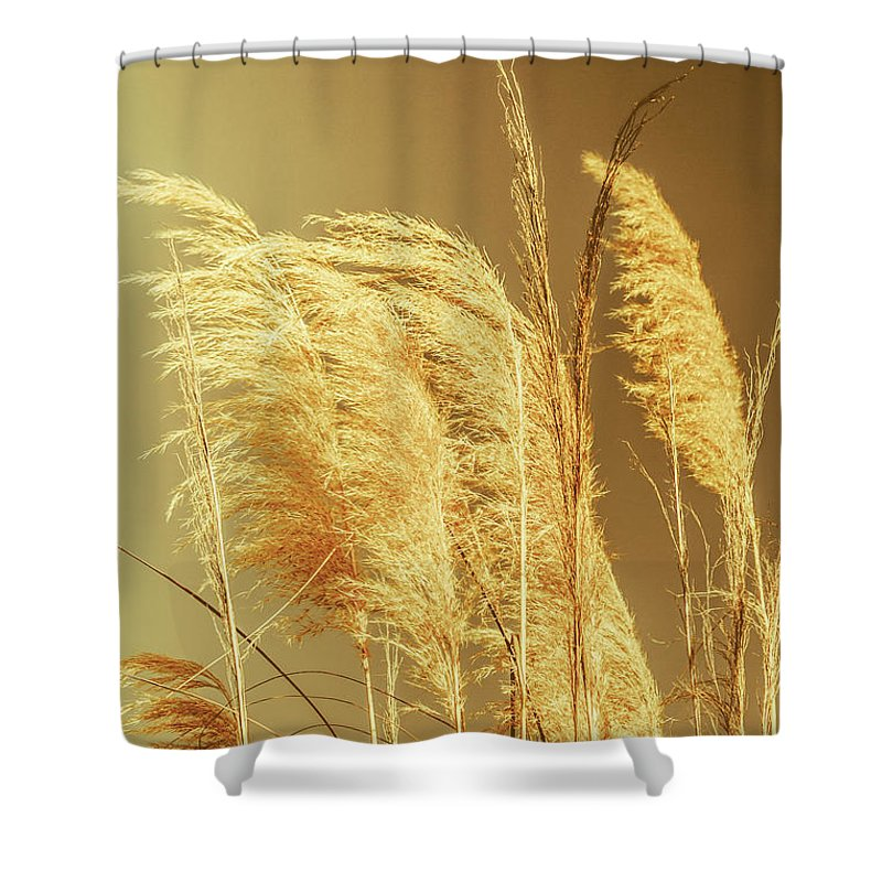Dry Shower Curtain featuring the photograph Windswept Autumn Brush Grass by Jorgo Photography - Wall Art Gallery