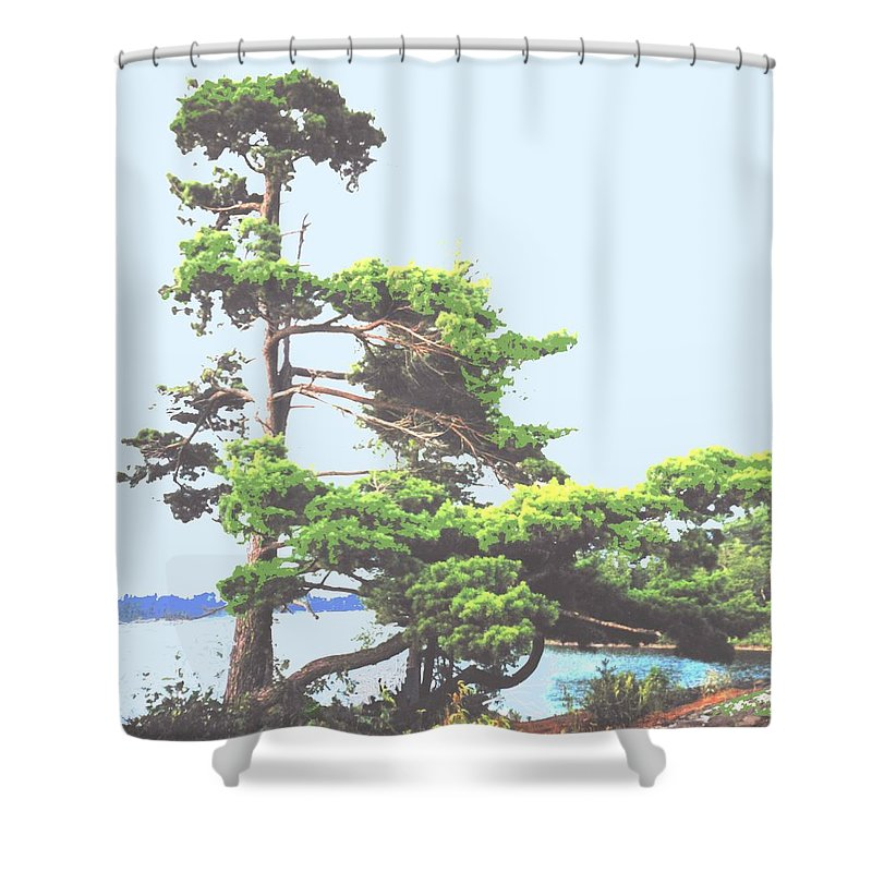 Pine Shower Curtain featuring the photograph Windswept by Ian MacDonald