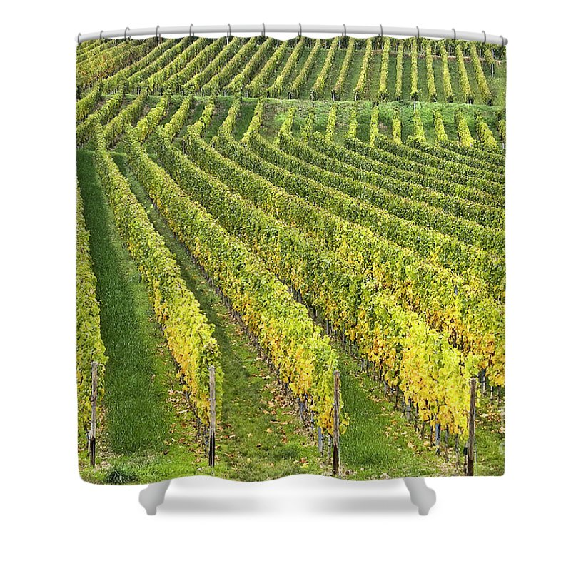 Heiko Shower Curtain featuring the photograph Wine Growing by Heiko Koehrer-Wagner