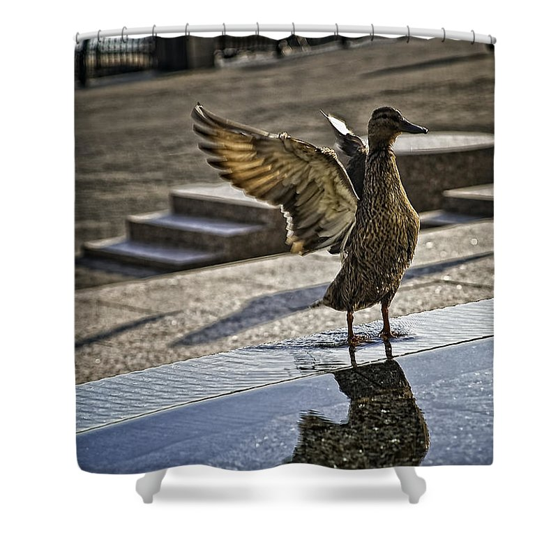 Bird Shower Curtain featuring the photograph Winged Bird by Madeline Ellis