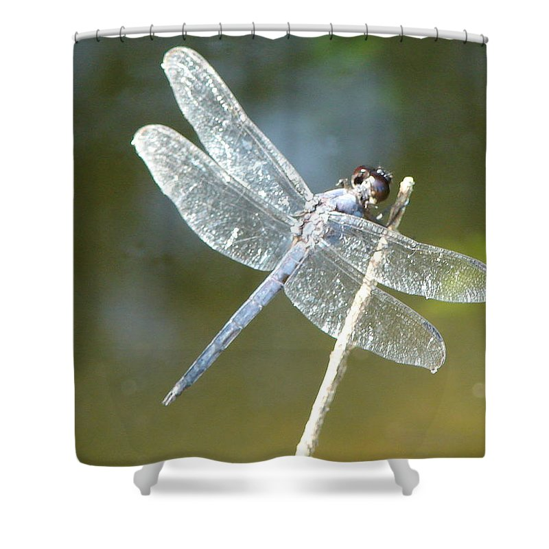 Dragonfly Wings Shower Curtain featuring the photograph Wings by Luciana Seymour