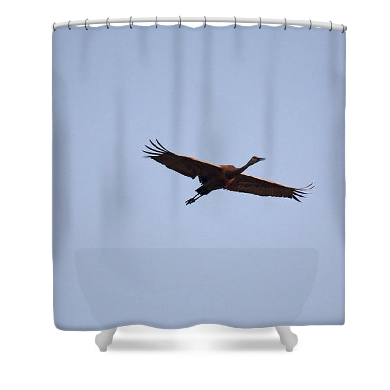 Sandhill Crane Shower Curtain featuring the photograph Wings Stretched by Linda Kerkau