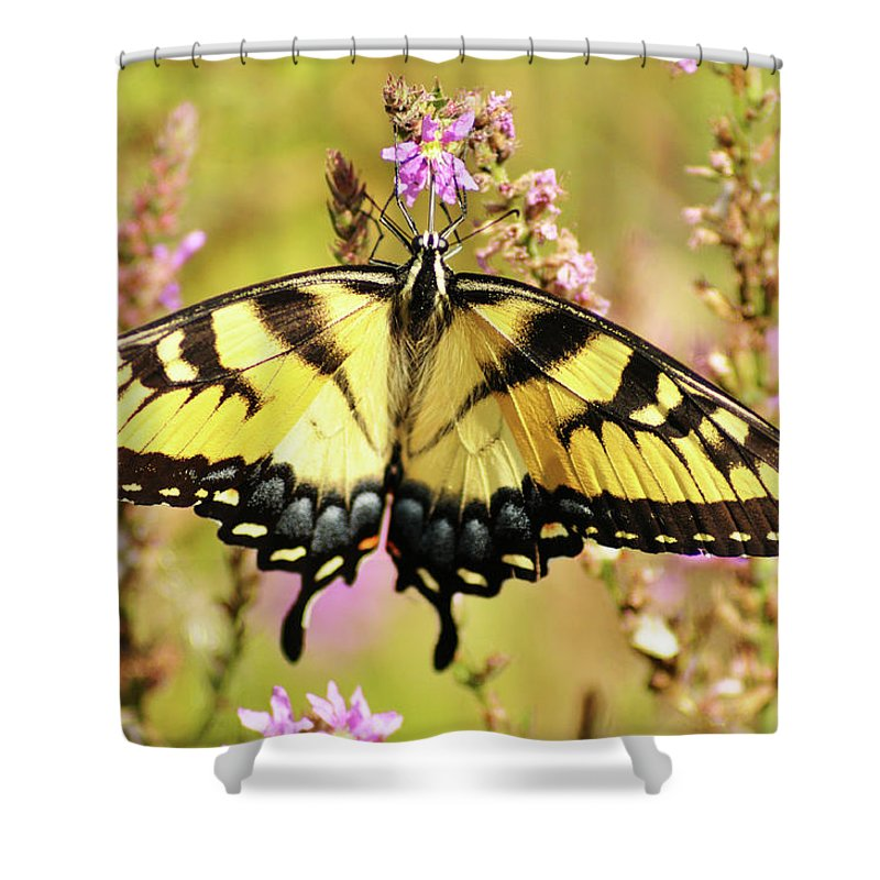 Butterfly Shower Curtain featuring the photograph Wingspan by Bill Cannon