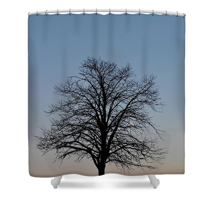 Tree Shower Curtain featuring the photograph Winter Bare by John Taylor