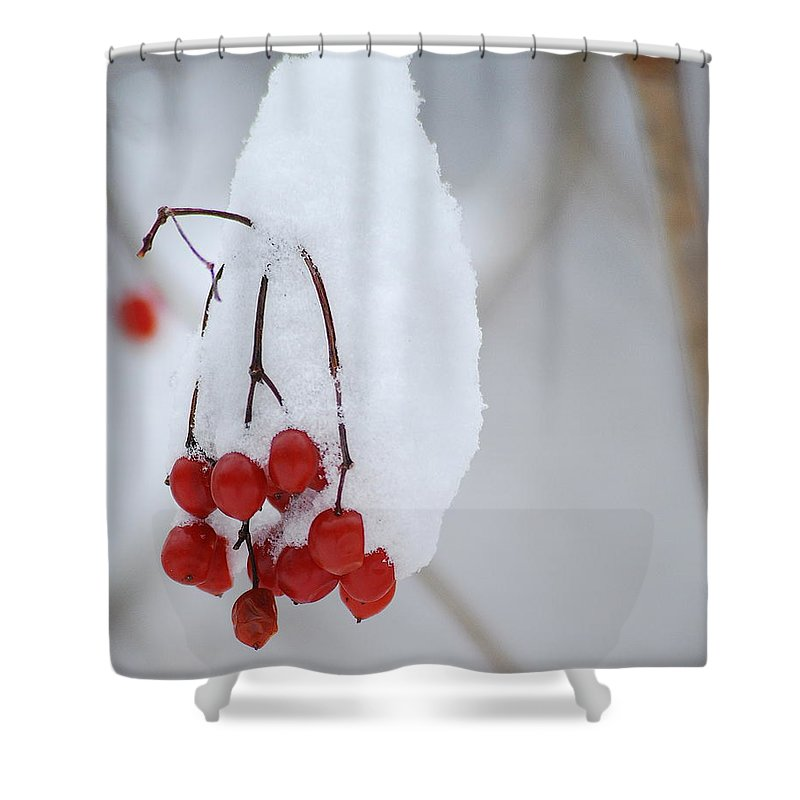 Nature Shower Curtain featuring the photograph Winter Berries by Michael Peychich