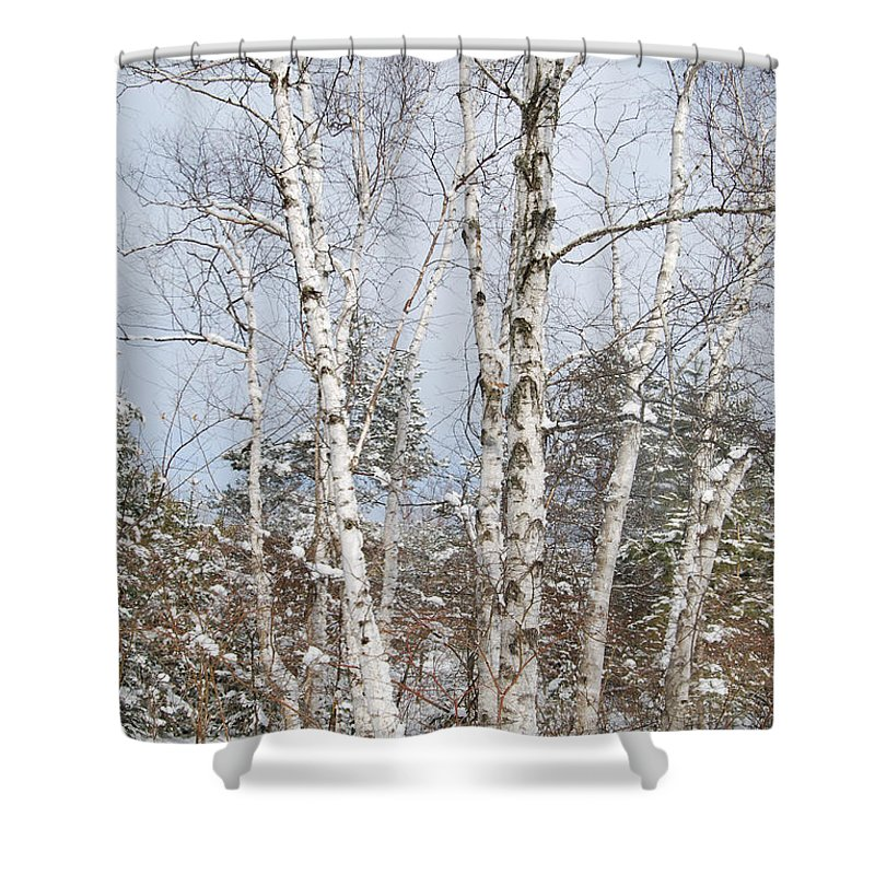 Winter Shower Curtain featuring the photograph Winter Birch by Michele Albu