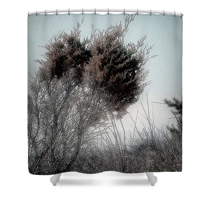 Beach Shower Curtain featuring the painting Winter Cedar by RC DeWinter