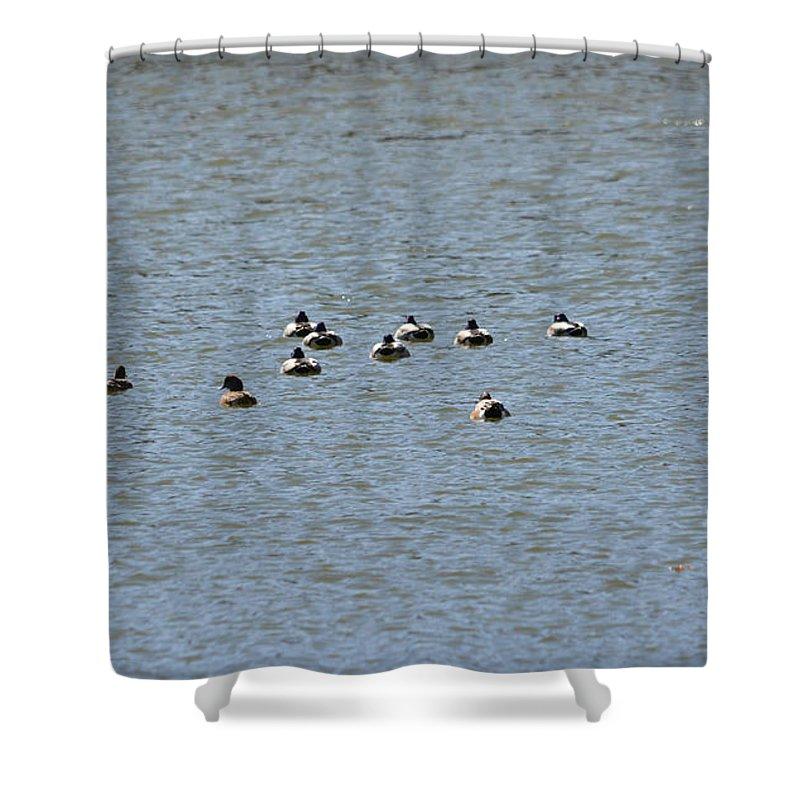 Winter Ducks Swimming Away Shower Curtain featuring the photograph Winter Ducks Swimming Away by Ruth Housley