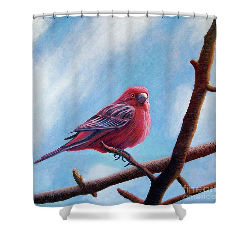 Bird Shower Curtain featuring the painting Winter Finch by Brian Commerford