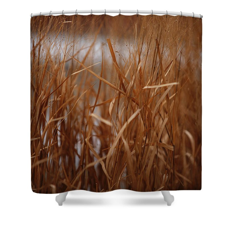 Grass Shower Curtain featuring the photograph Winter Grass - 1 by Linda Shafer