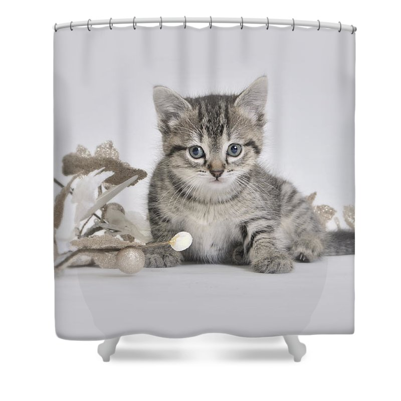 Kitten Shower Curtain Featuring The Photograph Winter By Cathryn Hardwick