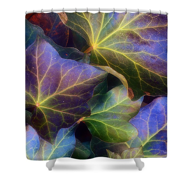 Leaves Shower Curtain featuring the photograph Winter Leaves by Tara Turner