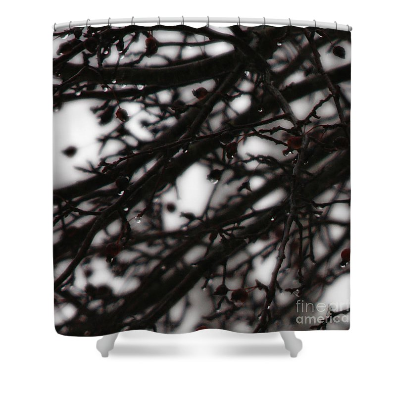 Branches Shower Curtain featuring the photograph Winter Rain by Linda Shafer