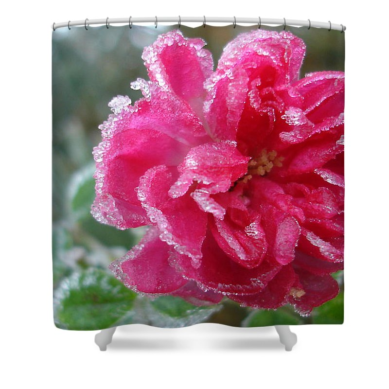 Rose Shower Curtain featuring the photograph Winter Rose by Susan Baker