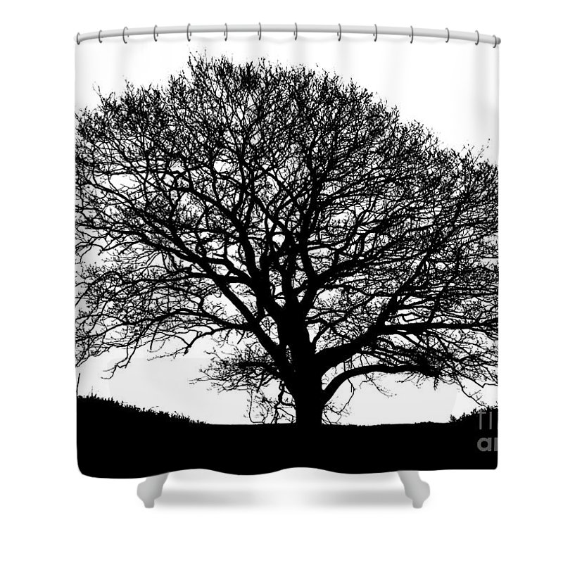 Black And White Shower Curtain featuring the photograph Winter Tree by Robert Edgar