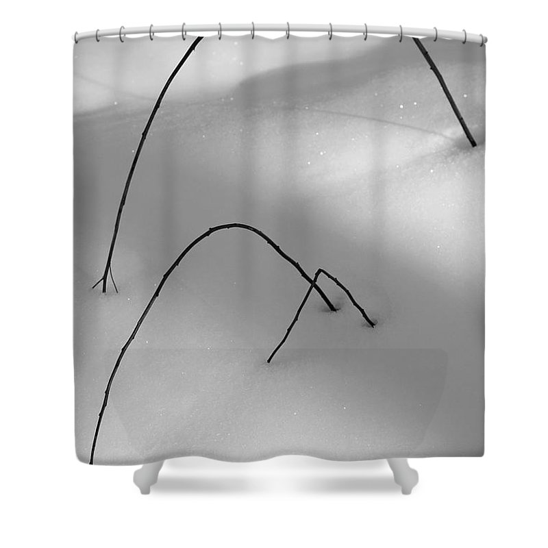 Twigs Shower Curtain featuring the photograph Winter Twigs by Jeff Galbraith