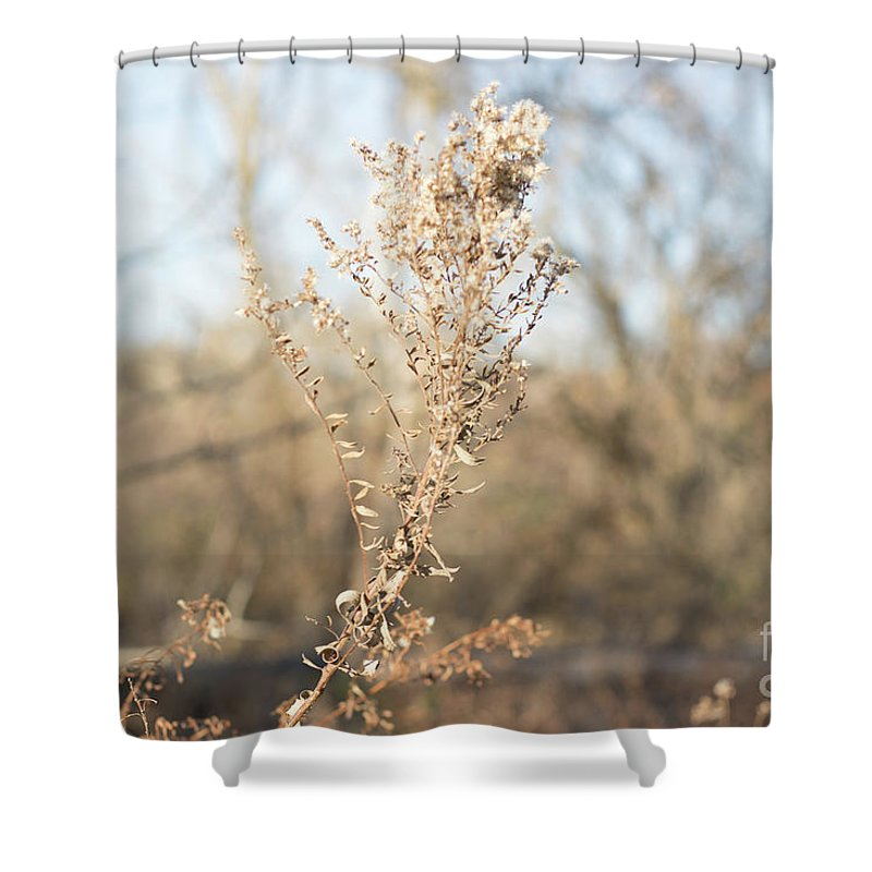 Winter Shower Curtain featuring the photograph Winter Weeds by Howard Roberts