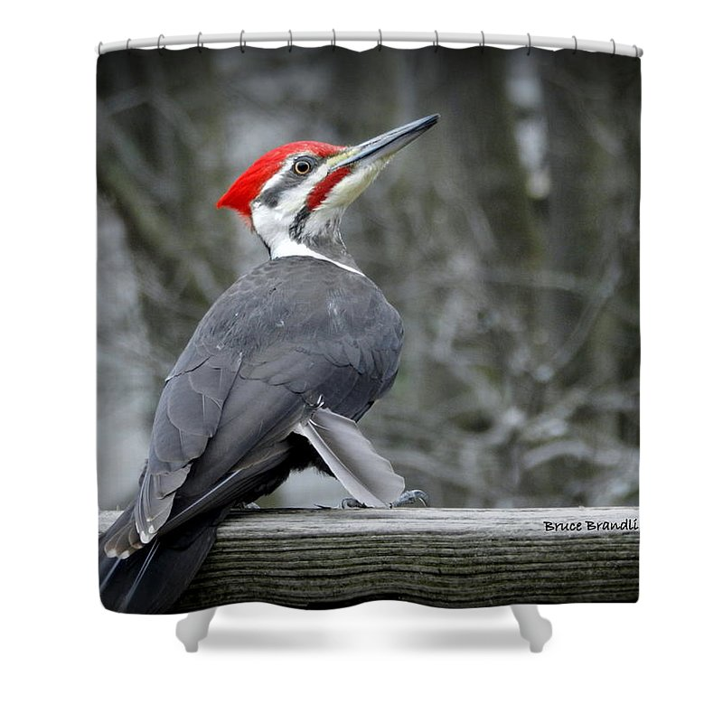 Pileated Woodpecker Shower Curtain featuring the photograph Winter Woodpecker by Bruce Brandli