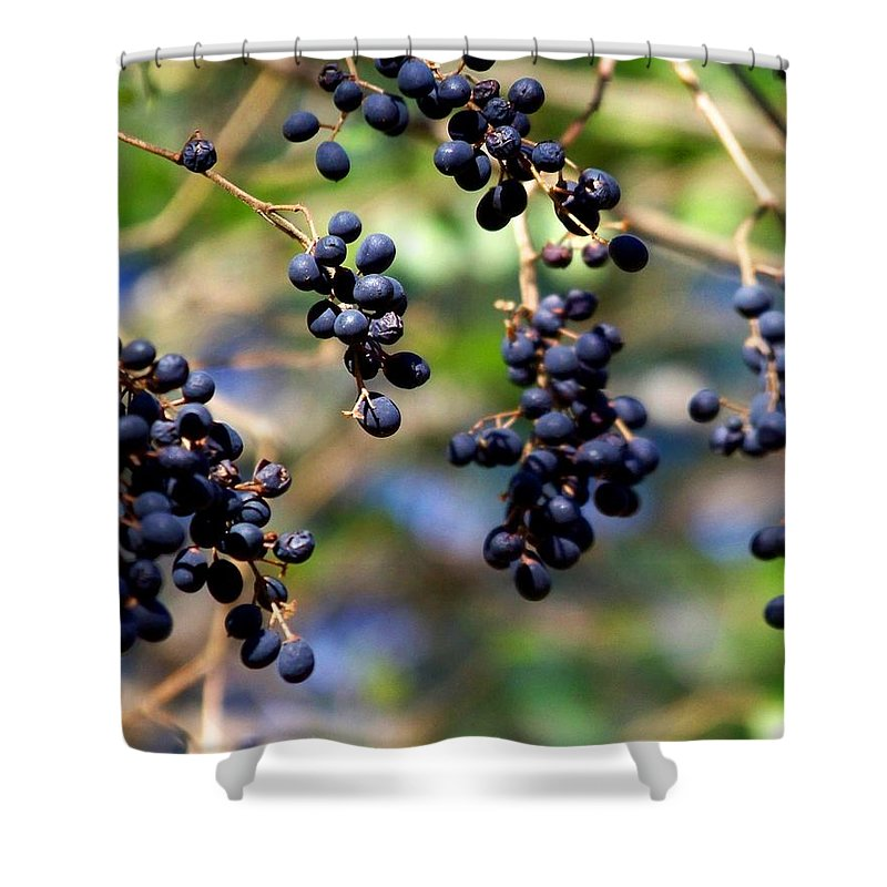 Berry Shower Curtain featuring the photograph Winterberries I by Jai Johnson