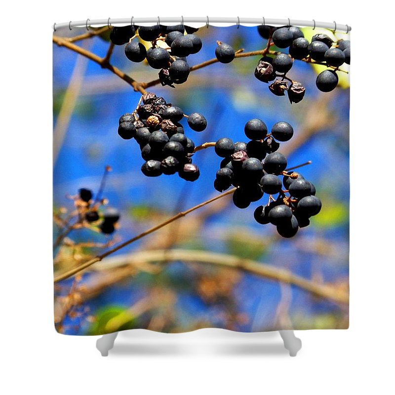 Winter Shower Curtain featuring the photograph Winterberries II by Jai Johnson