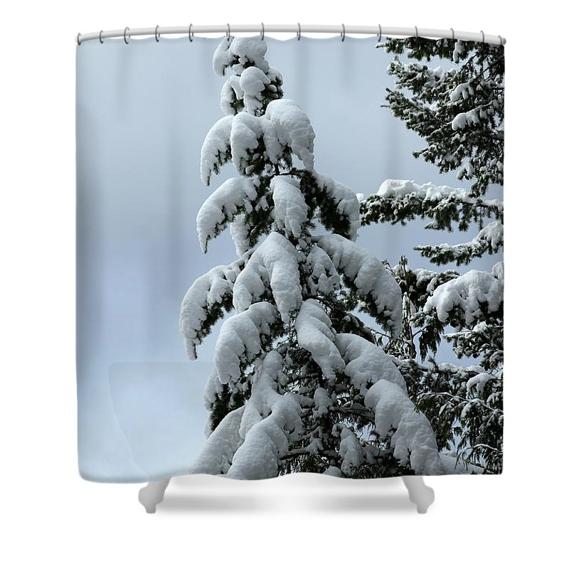 Winter Shower Curtain featuring the photograph Winter's Burden by Leone Lund