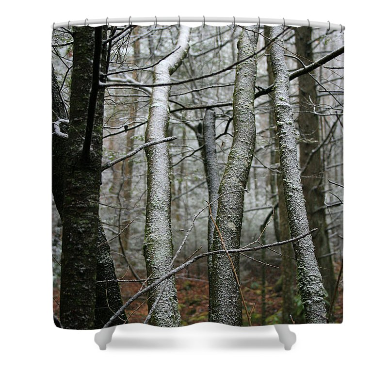 Tree Woods Forest Wood Snow White Green Winter Season Nature Cold Shower Curtain featuring the photograph Wintery Day by Andrei Shliakhau