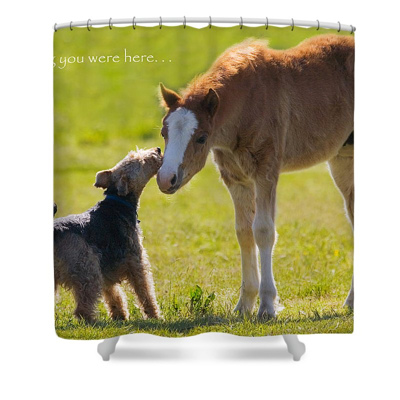 Baby Shower Curtain featuring the photograph Wishing You Were Here by Karen Ulvestad