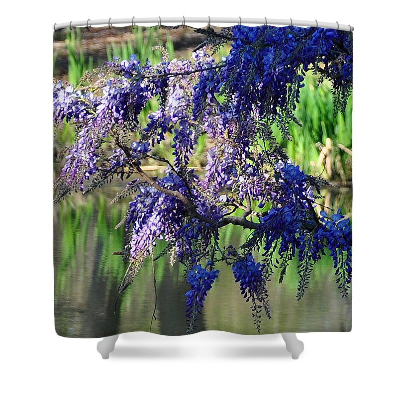 Blue Shower Curtain featuring the photograph Wisteria by Terry Anderson