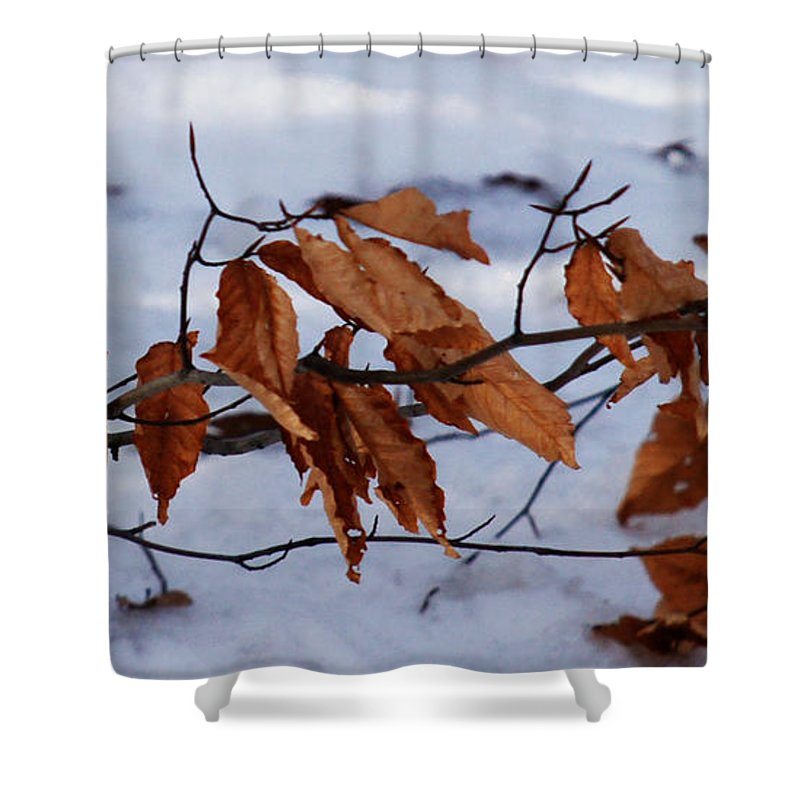 Autumn Shower Curtain featuring the photograph With Autumn's Passing by Linda Shafer