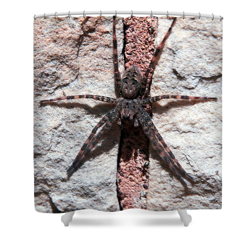 Spider Shower Curtain featuring the photograph Wolf Spider by Frank Guemmer
