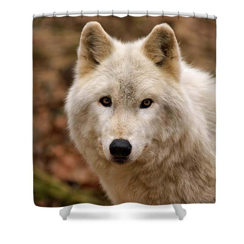 Wolf Shower Curtain featuring the photograph Wolf Watching by Sandy Keeton