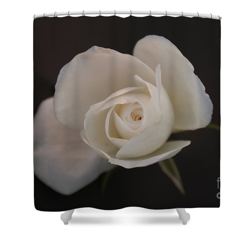 Rose Shower Curtain featuring the photograph Wonder by Shelley Jones