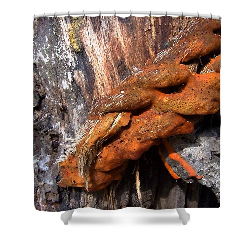 Wood Shower Curtain featuring the photograph Wood And Iron Braid Image by Laurie Paci
