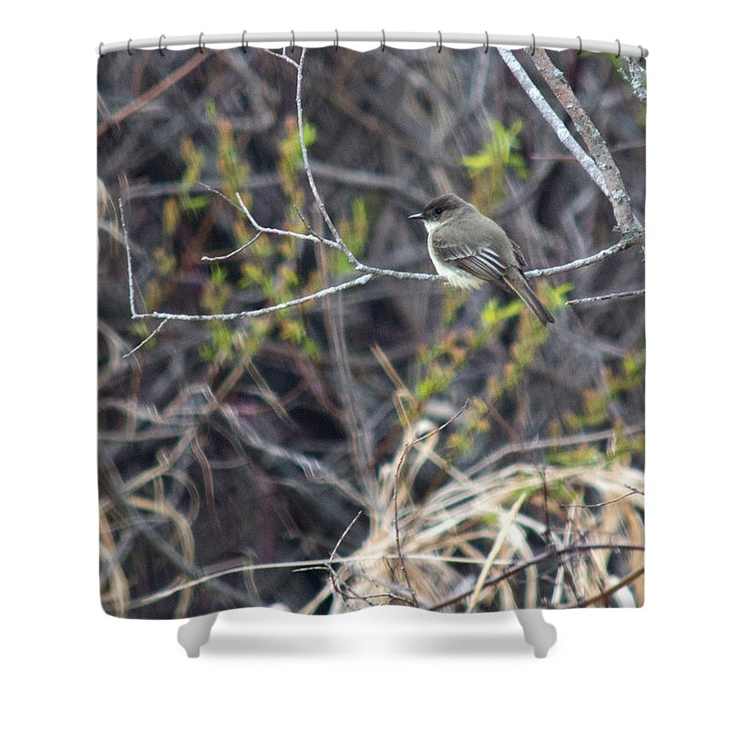 Wood Pewee Shower Curtain featuring the photograph Wood Pewee by Linda Kerkau
