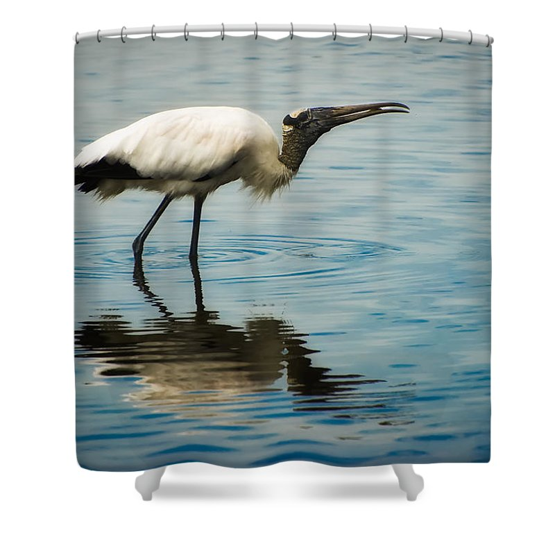 Stork Shower Curtain featuring the photograph Wood Stork by Rich Leighton