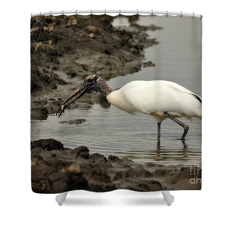 Wood Stork Shower Curtain featuring the photograph Wood Stork With Fish by Al Powell Photography USA